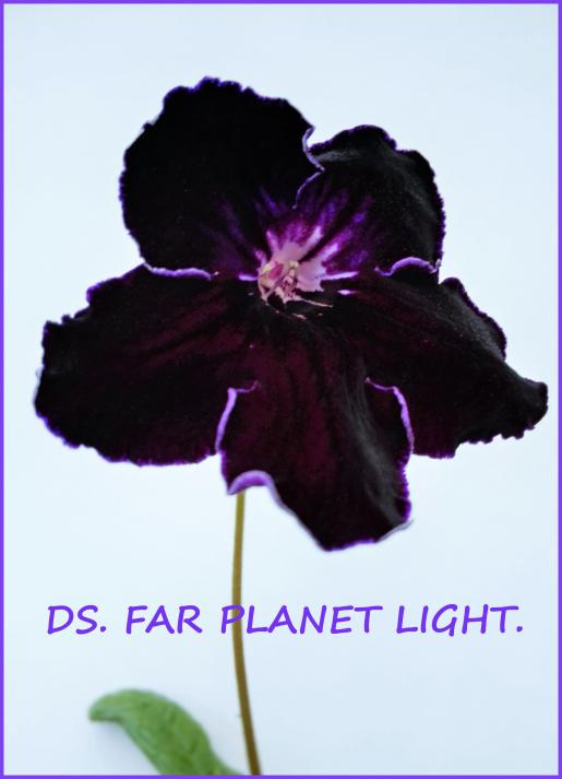 DS.Far Planet Light.